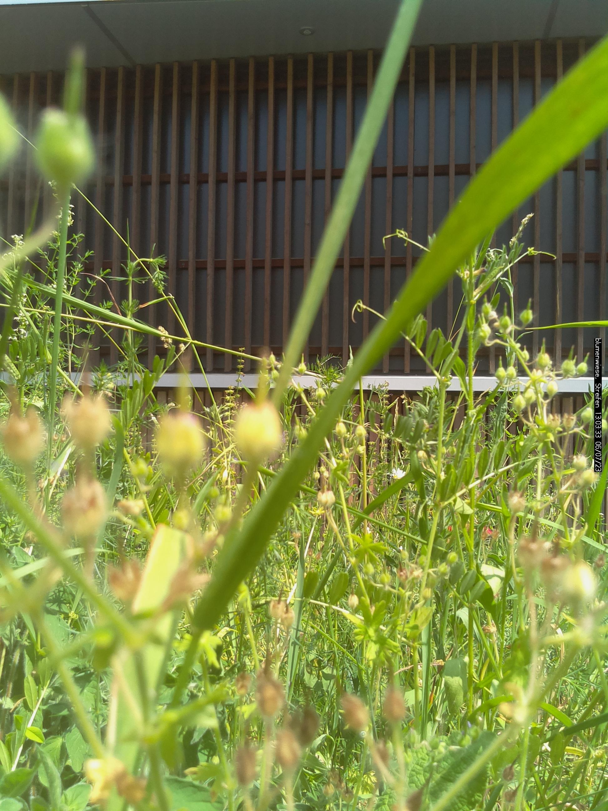 Unser Foto zeigt die Seitenansicht der Blumenwiese in Triesdorf