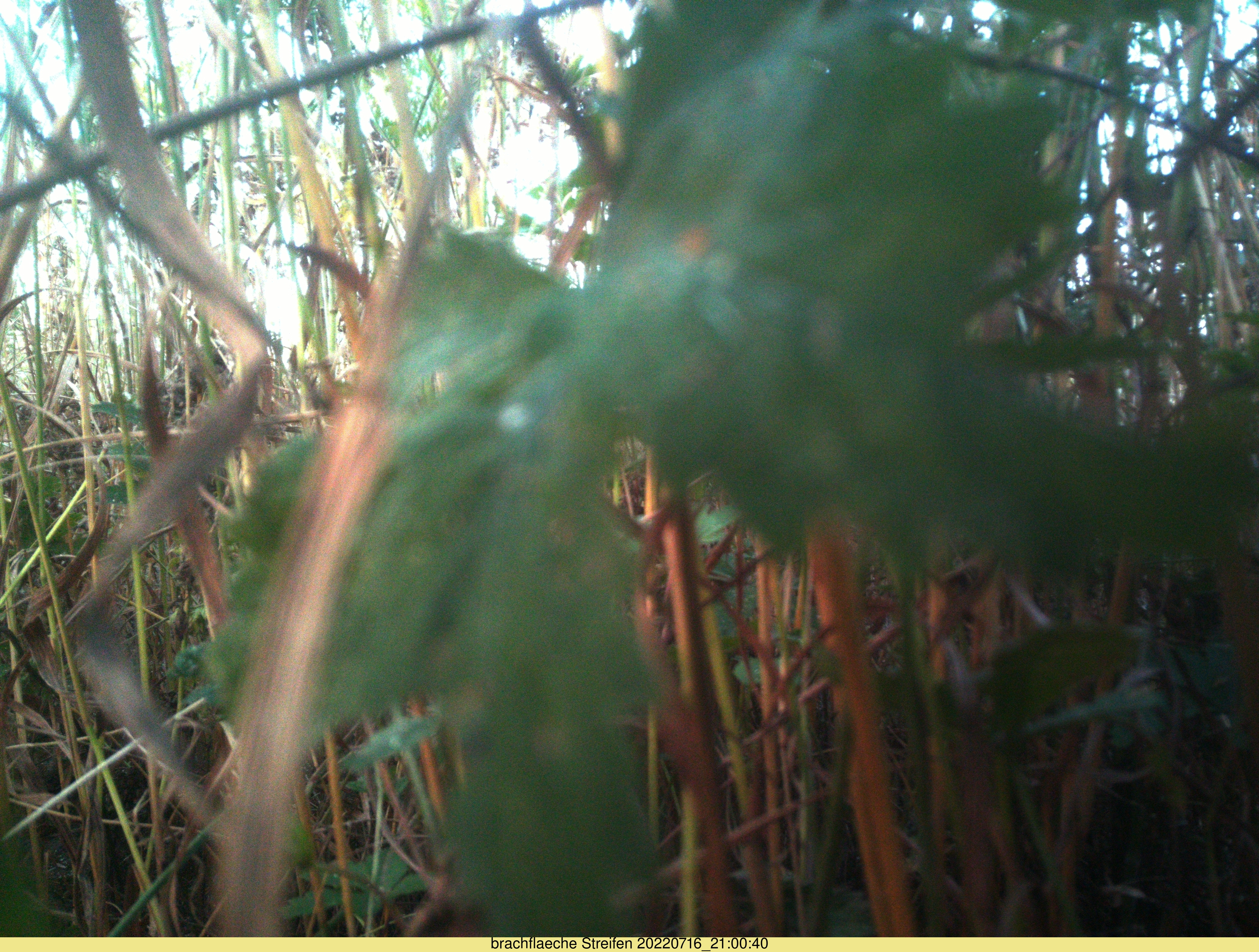Unser Foto zeigt die Seitenansicht auf die Brachfläche in Petersaurach