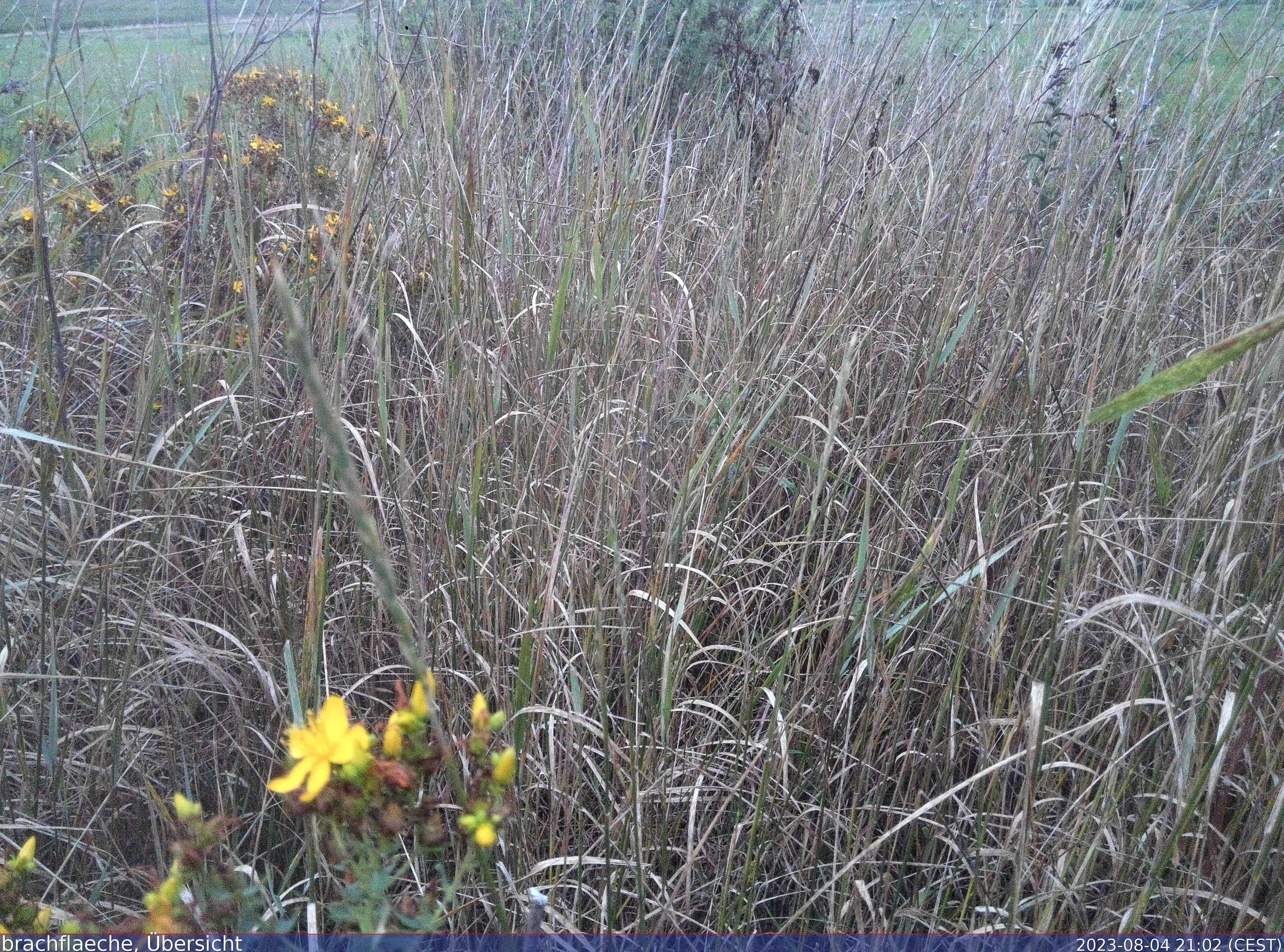 Unser Foto zeigt die Draufsicht auf die Brachfläche in Petersaurach